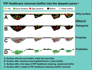 biofilm-illustration-pip