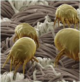 antil-alerjik-sprey