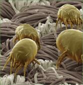 antil-alerjik-sprey00005